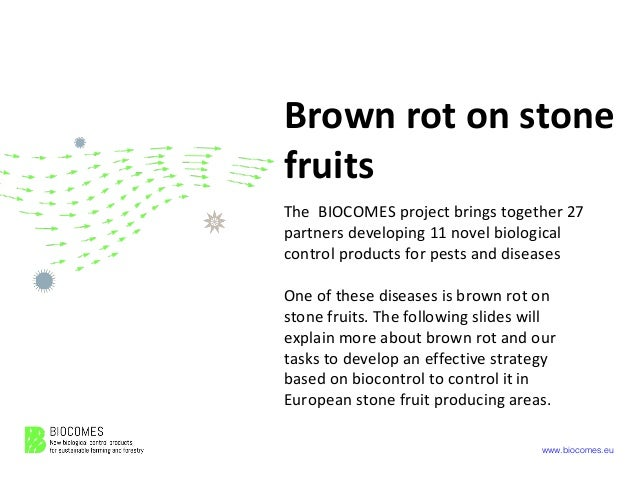 www.biocomes.eu Brown rot on stone fruits The BIOCOMES project brings together 27 partners developing 11 novel biological ...