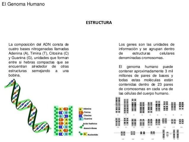 Slideshare Genoma Humano