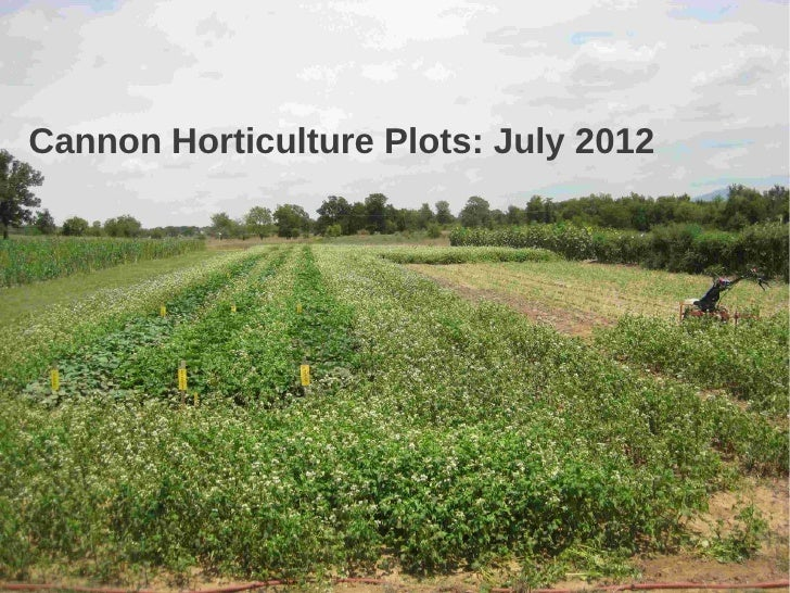 Cannon Horticulture Plots: July 2012