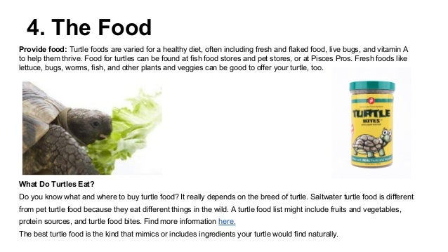 how to take care of a pet turtle