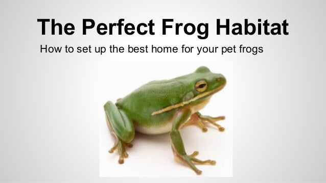 a look at the feeding habits and habitat of frogs Bullfrogs eat everything fishing spider eating frogs an incredibly close look at the hourglass frog and its tadpoles ng live.