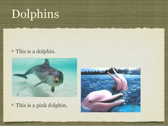 Dolphins This is a dolphin.  This is a pink dolphin.