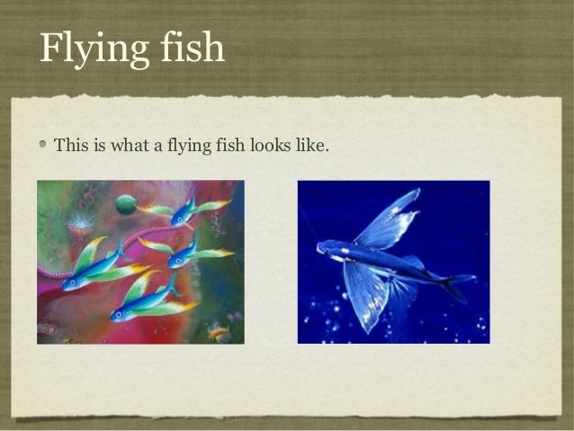 Flying fish This is what a flying fish looks like.