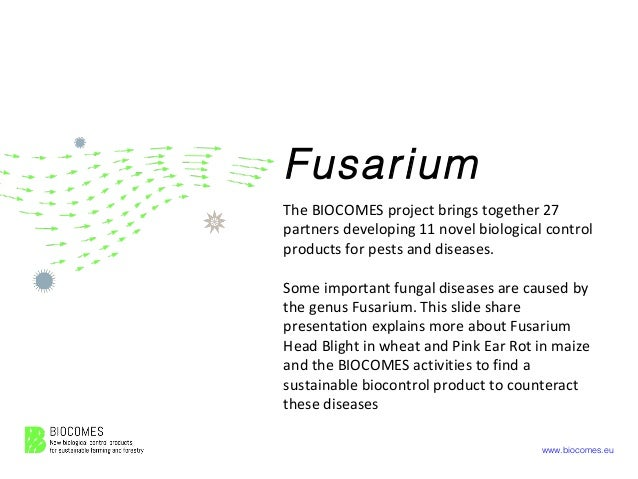 www.biocomes.eu Fusarium The BIOCOMES project brings together 27 partners developing 11 novel biological control products ...