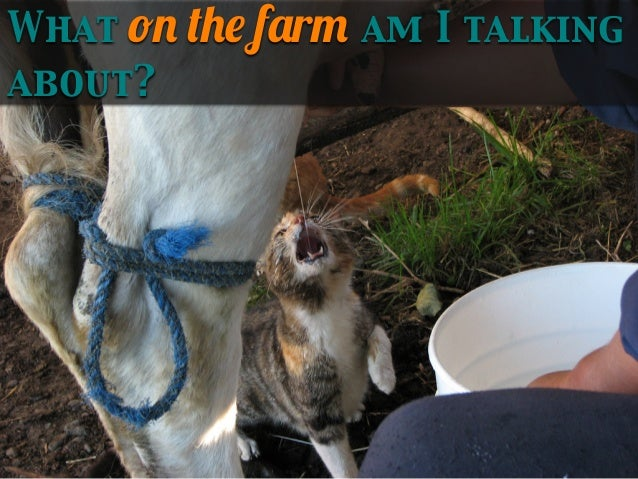 What on the farm am I talking about?