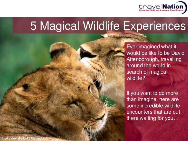 See Wildlife With An Around The World Trip Slide 2