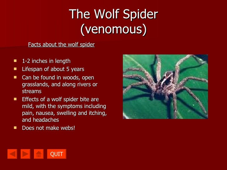 What does a brown recluse spider look like