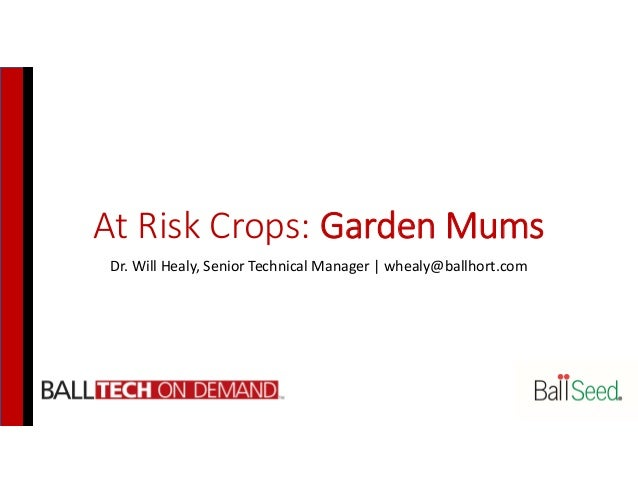 At Risk Crops: Garden Mums Dr. Will Healy, Senior Technical Manager   whealy@ballhort.com