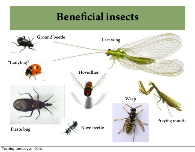 ... 13. Beneficial Insects ...