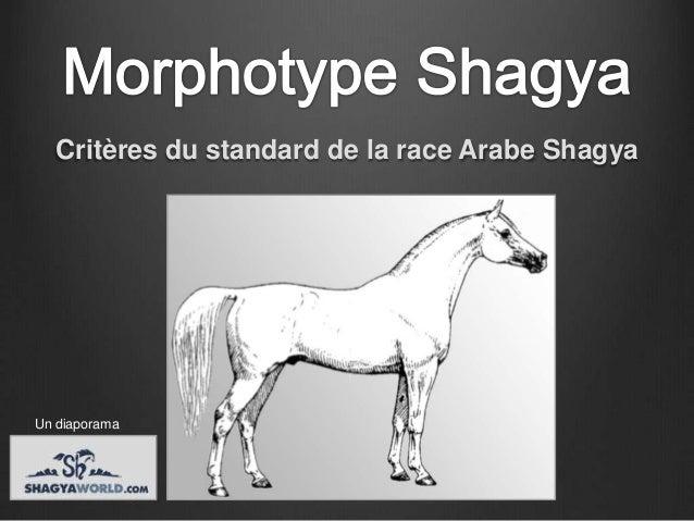 Critères du standard de la race Arabe ShagyaUn diaporama