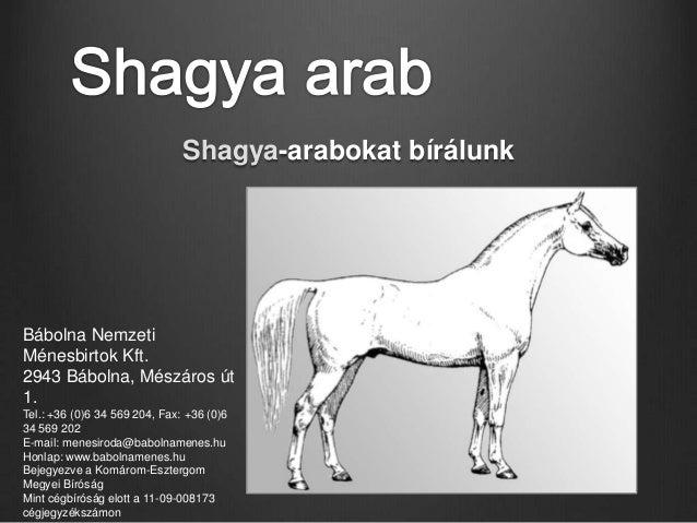 Shagya-arabokat bírálunkBábolna NemzetiMénesbirtok Kft.2943 Bábolna, Mészáros út1.Tel.: +36 (0)6 34 569 204, Fax: +36 (0)6...