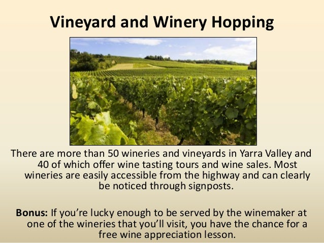 Vineyard and Winery Hopping There are more than 50 wineries and vineyards in Yarra Valley and 40 of which offer wine tasti...