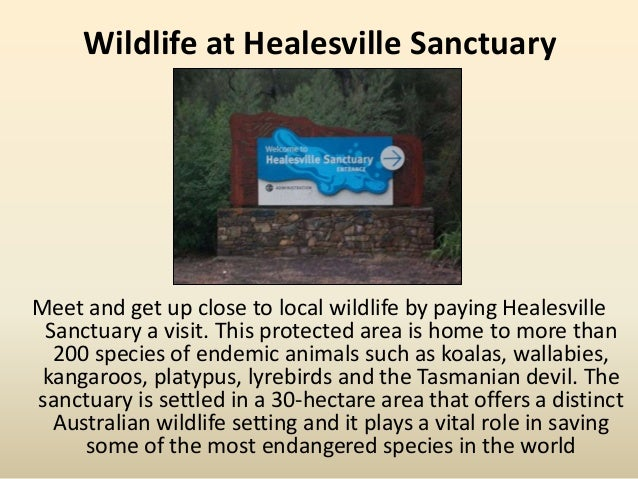 Wildlife at Healesville Sanctuary Meet and get up close to local wildlife by paying Healesville Sanctuary a visit. This pr...