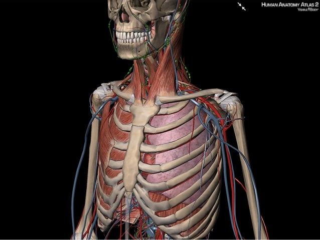 Use Visible Bodys 3d Images To Explain The Location Of The Heart And