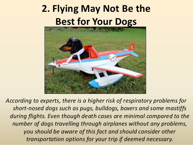 2. Flying May Not Be the Best for Your Dogs According to experts, there is a higher risk of respiratory problems for short...