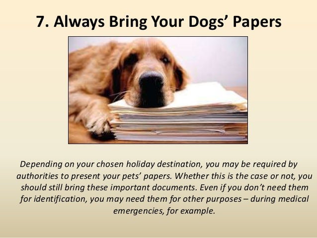7. Always Bring Your Dogs' Papers Depending on your chosen holiday destination, you may be required by authorities to pres...