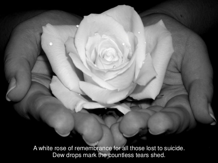 A white rose of remembrance for all those lost to suicide.       Dew drops mark the countless tears shed.