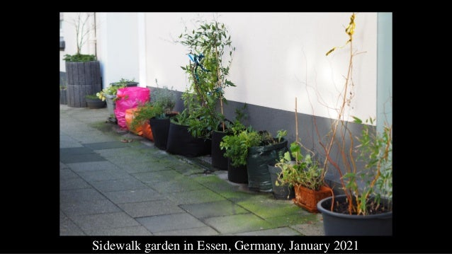 Sidewalk garden in Essen, Germany, January 2021