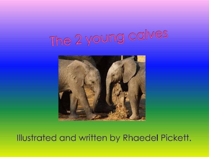 The 2 young calves<br />Illustrated and written by Rhaedel Pickett.<br />