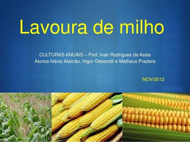 Lavoura de milho   CULTURAS ANUAIS – Prof. Ivair Rodrigues de Assis Alunos Névio Alarcão, Higor Dessordi e Matheus Pradera...