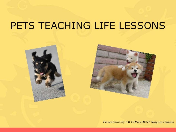 PETS TEACHING LIFE LESSONS               Presentation by I M CONFIDENT Niagara Canada