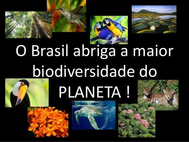 O Brasil abriga a maior biodiversidade do PLANETA !