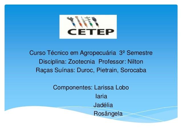 Curso Técnico em Agropecuária 3º Semestre Disciplina: Zootecnia Professor: Nilton Raças Suínas: Duroc, Pietrain, Sorocaba ...