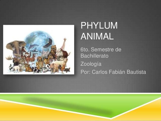 PHYLUM ANIMAL 6to. Semestre de Bachillerato Zoología Por: Carlos Fabián Bautista