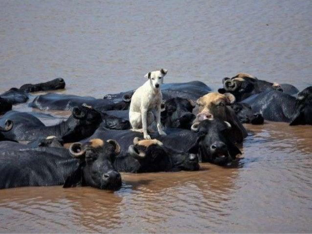 Best Animal Photos of 2012