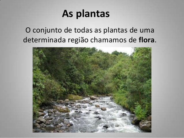 As plantas O conjunto de todas as plantas de uma determinada região chamamos de flora.