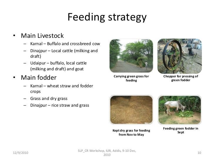 Feeding strategy<br />Main Livestock <br />Karnal – Buffalo and crossbreed cow<br />Dinajpur – Local cattle (milking and d...