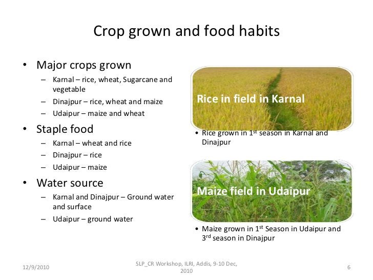Crop grown and food habits <br />Major crops grown <br />Karnal – rice, wheat, Sugarcane and vegetable<br />Dinajpur – ric...