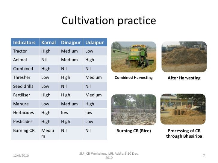 Cultivation practice <br />12/9/2010<br />SLP_CR Workshop, ILRI, Addis, 9-10 Dec, 2010<br />7<br />