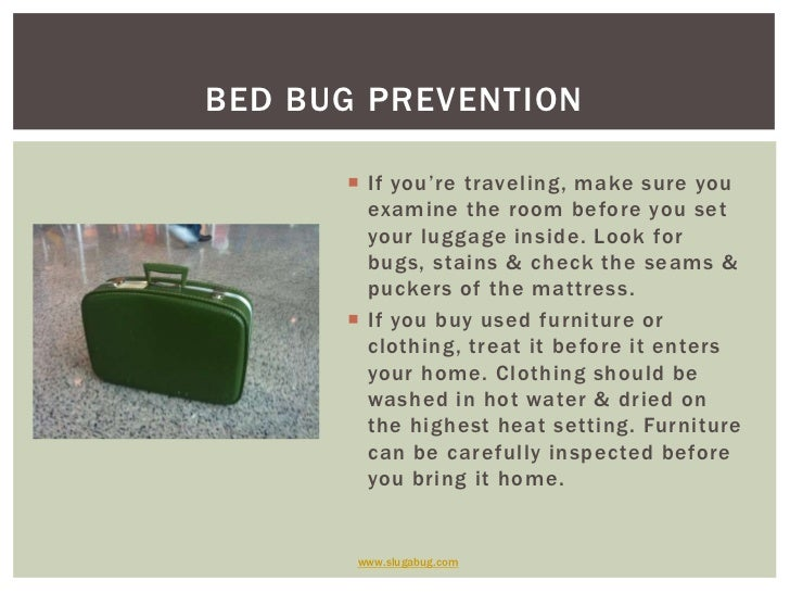 can bed bugs travel on clothes bed bugs can travel in dirty