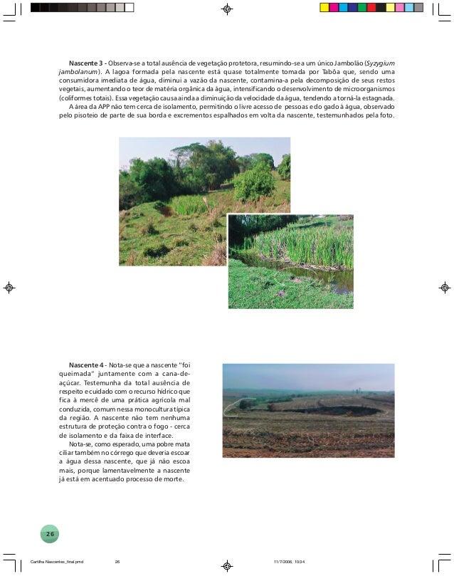 26 Nascente 3 - Observa-se a total ausência de vegetação protetora, resumindo-se a um único Jambolão (Syzygium jambolanum)...