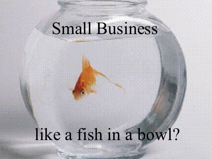 Small Business  like a fish in a bowl?