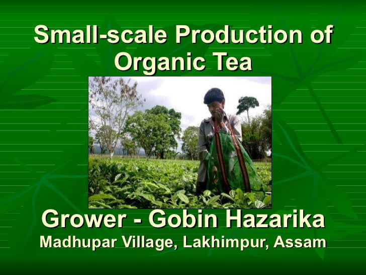 Small-scale Production of Organic Tea Grower - Gobin Hazarika Madhupar Village, Lakhimpur, Assam