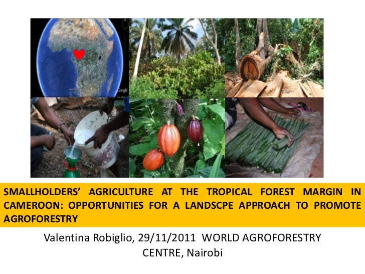 SMALLHOLDERS' AGRICULTURE AT THE TROPICAL FOREST MARGIN INCAMEROON: OPPORTUNITIES FOR A LANDSCPE APPROACH TO PROMOTEAGROFO...