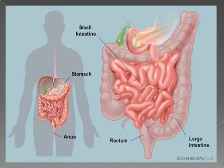 small intestine notes The large intestine is about 15 m sign out literature notes test prep the small intestine large intestine quiz: large intestine the pancreas.