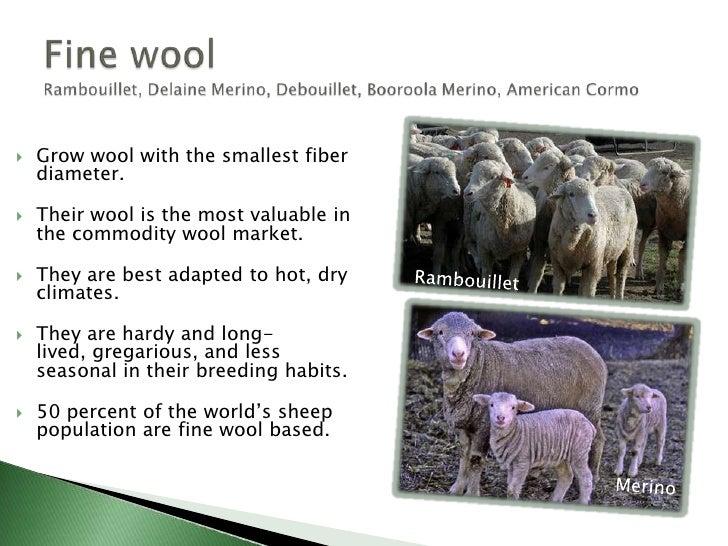 Intro to small ruminant enterprises
