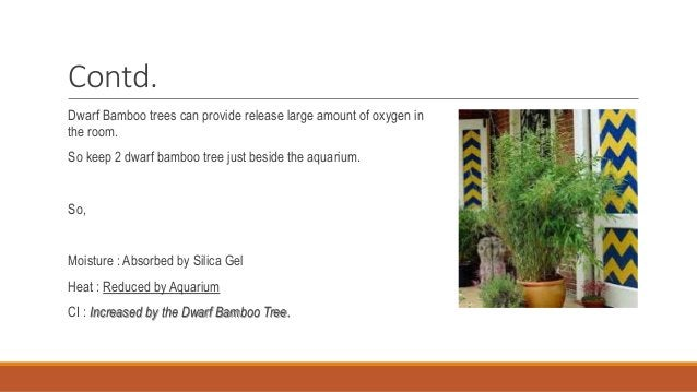 Contd. Dwarf Bamboo trees can provide release large amount of oxygen in the room. So keep 2 dwarf bamboo tree just beside ...