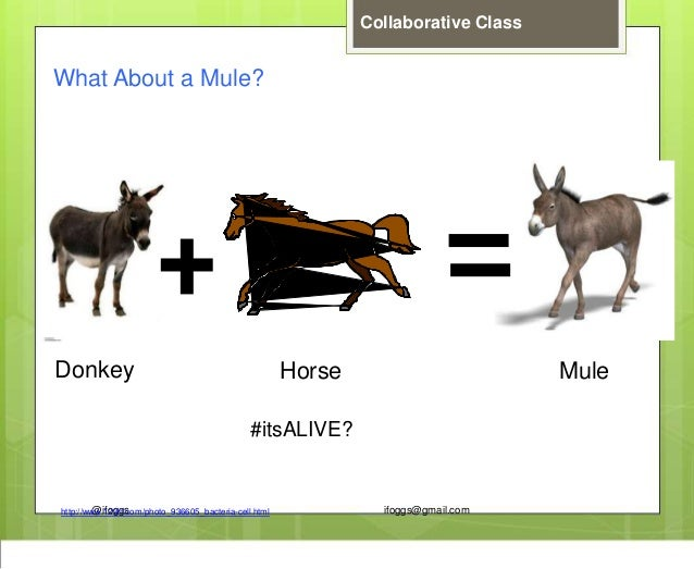 @ifoggs ifoggs@gmail.com Collaborative Class http://www.123rf.com/photo_936605_bacteria-cell.html What About a Mule? Donke...