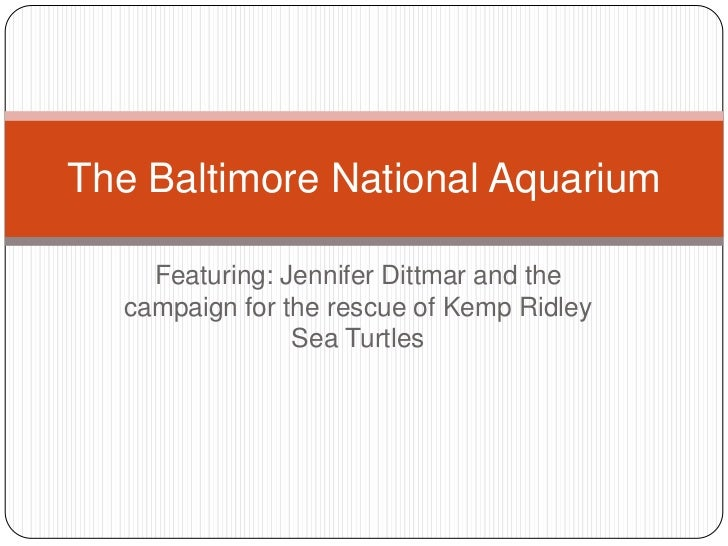 The Baltimore National Aquarium    Featuring: Jennifer Dittmar and the  campaign for the rescue of Kemp Ridley            ...
