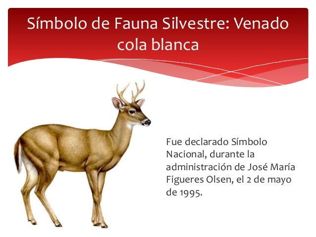 Que Significa El Venado Cola Blanca Costa Rica - Lesbos