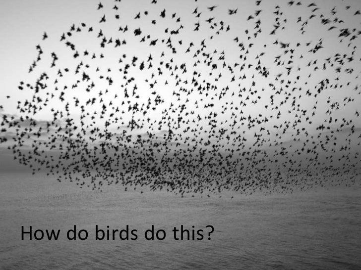 Disrupting Traditional Leadership: Flock Behavior in Communities Slide 2