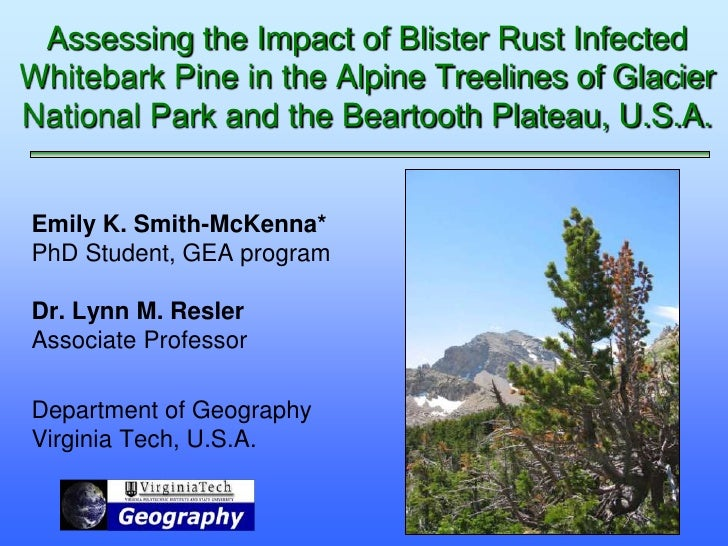 Assessing the Impact of Blister Rust InfectedWhitebark Pine in the Alpine Treelines of GlacierNational Park and the Bearto...