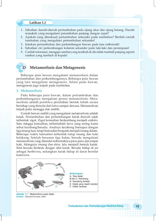 53 Koleksi Tabel 2.9 Tahapan Metamorfosis Gambar Hewan Dan Tahap Pertumbuhannya Keterangan Terbaik