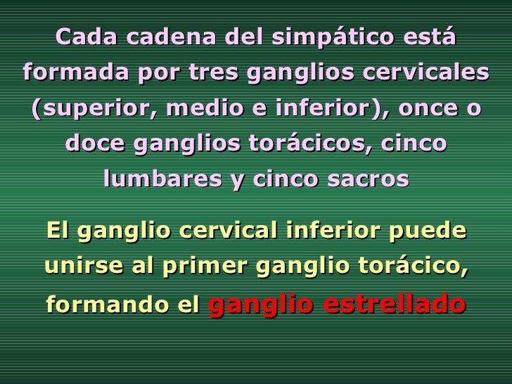 El ganglio cervical inferior puede unirse al primer ganglio torácico, formando el  ganglio estrellado Cada cadena del simp...