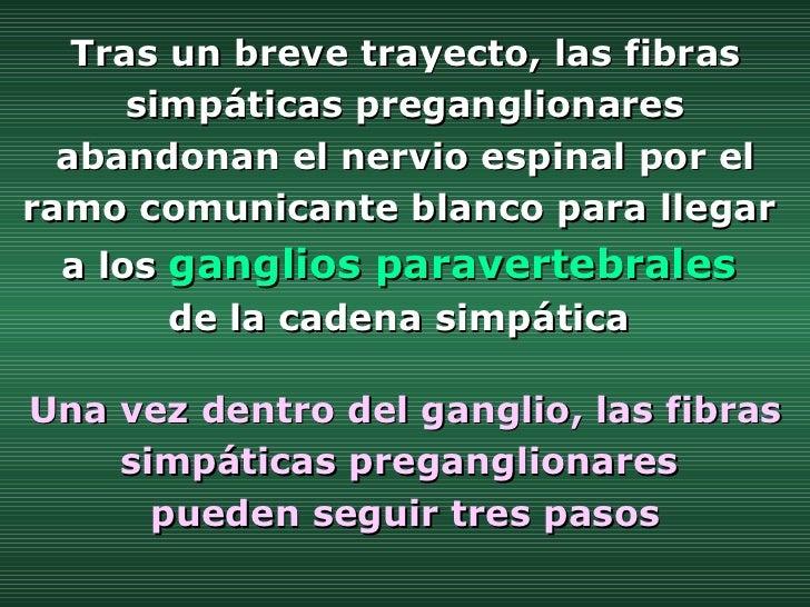 Una vez dentro del ganglio, las fibras simpáticas preganglionares  pueden seguir tres pasos Tras un breve trayecto, las fi...