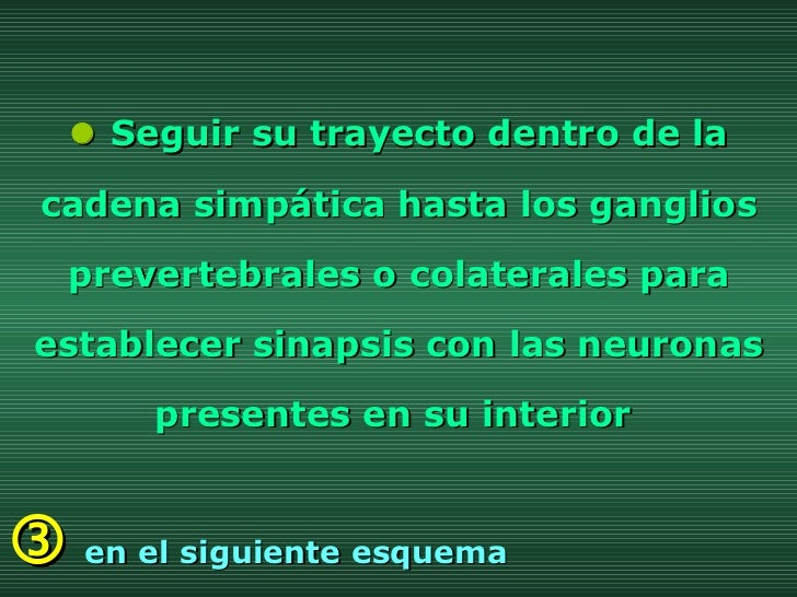    Seguir su trayecto dentro de la cadena simpática hasta los ganglios prevertebrales o colaterales para establecer sinap...